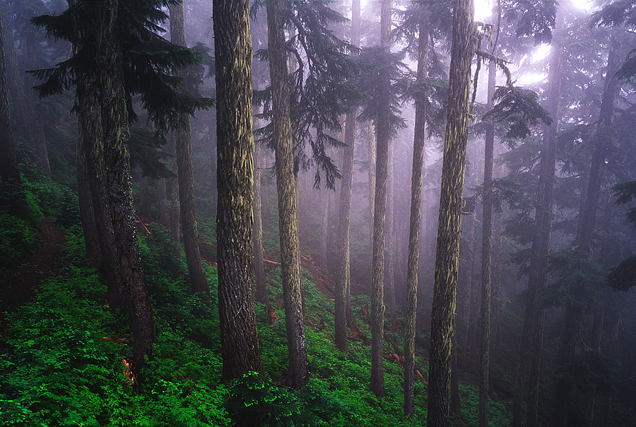 Forest off Snoqualmie Pass, Washington Cascades. | LENS MODEL NOT SET <br> Click image for more details, Click <b>X</b> on top right of image to close