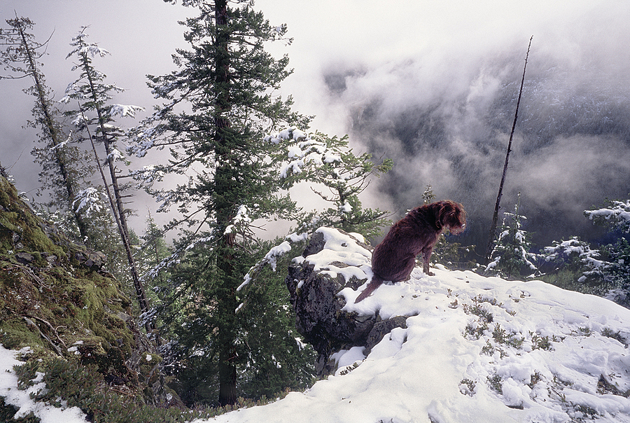 Choco on Raven's Roost, Washington Cascades. | LENS MODEL NOT SET <br> Click image for more details, Click <b>X</b> on top right of image to close