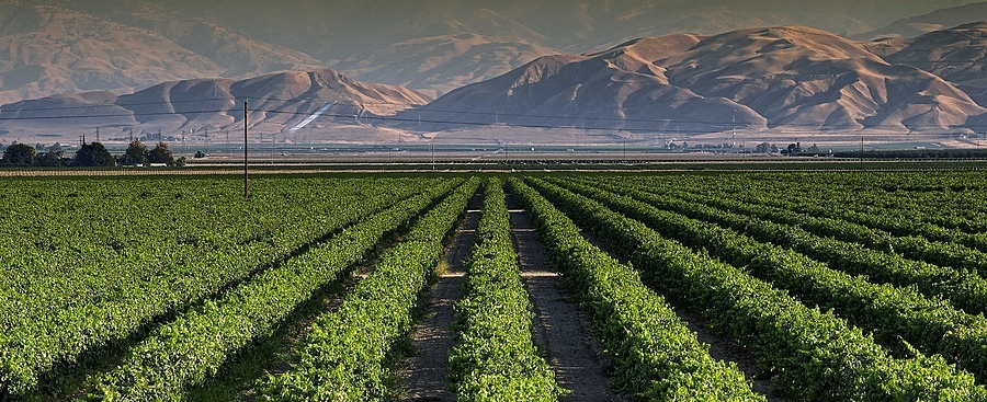 San Joaquin Valley Crops | ZEISS APO SONNAR F2 135MM <br> Click image for more details, Click <b>X</b> on top right of image to close