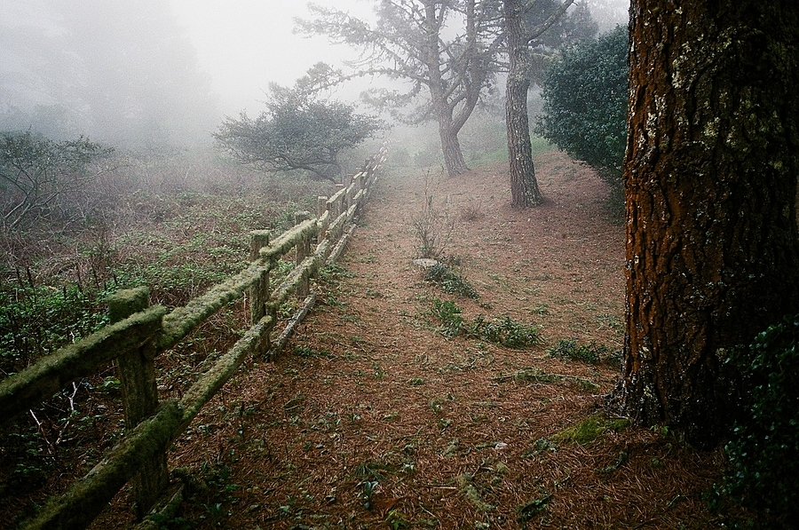 Fence and Fog | ZEISS PLANAR F1.4 50MM <br> Click image for more details, Click <b>X</b> on top right of image to close